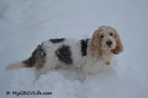Huge snowflakes coming down!