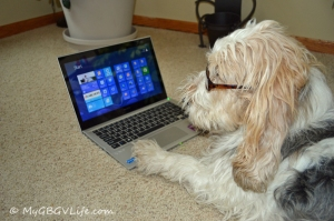 "The Windows 8 ""paw friendly"" tiles, just love it!"