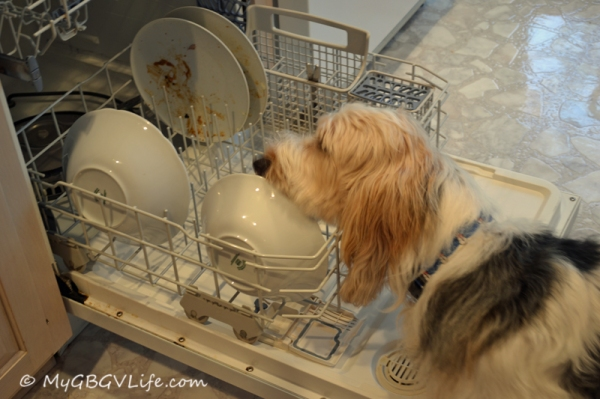 I better help get some of the food off these dishes!