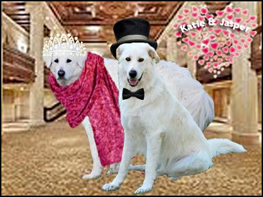 Katie & Jasper at the Ball!