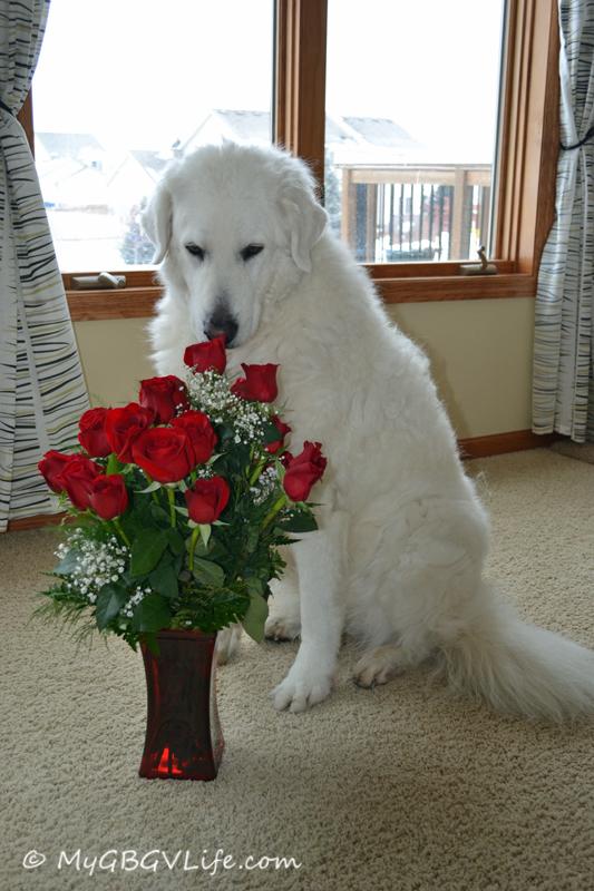 Katie w roses