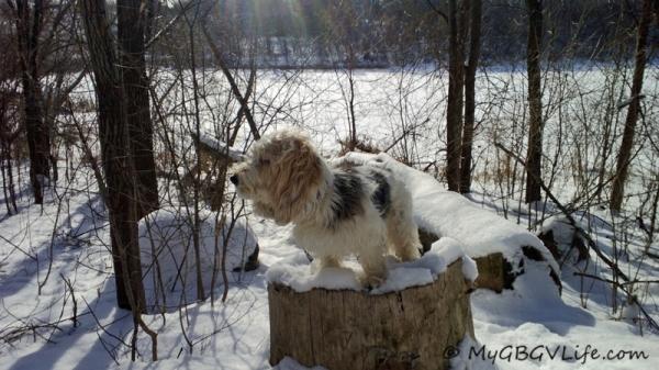 on a stump
