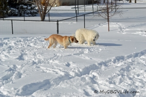 Katie & Lena arguing over a dumb buried tennis ball.