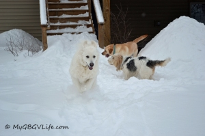 Fun in the snow at Emma's B & B