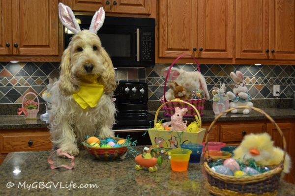 Time For The Easter Bunny