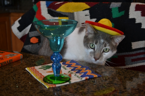 Bert, I think getting a bit tipsy from the barkaritas and catnip!