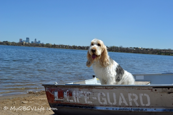 Emma the GBGV Water Rescue Hound